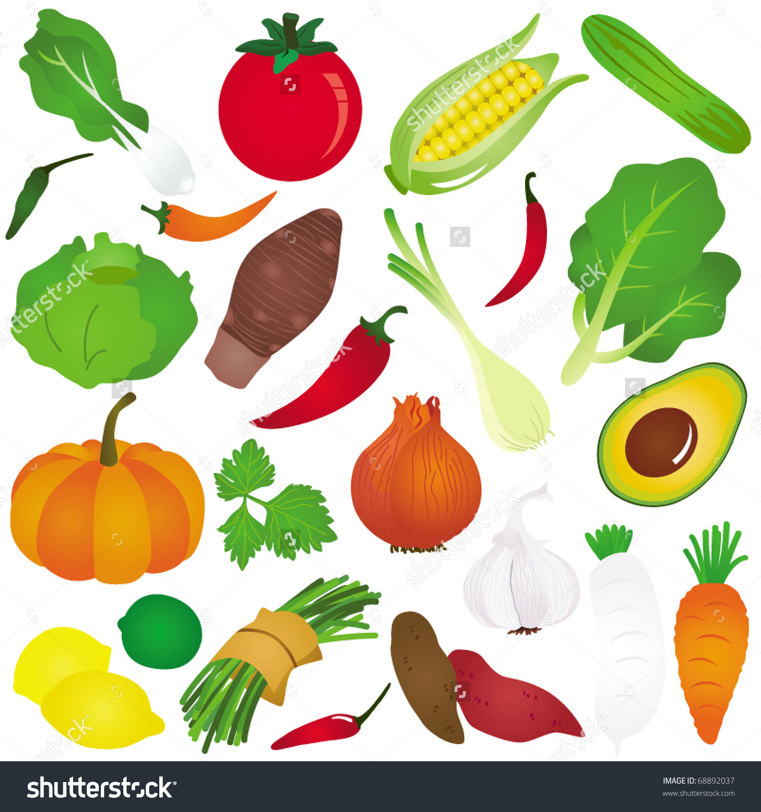 Vector Fruit Vegetable Onion Lemon Cabbage Stock Vector 68892037.