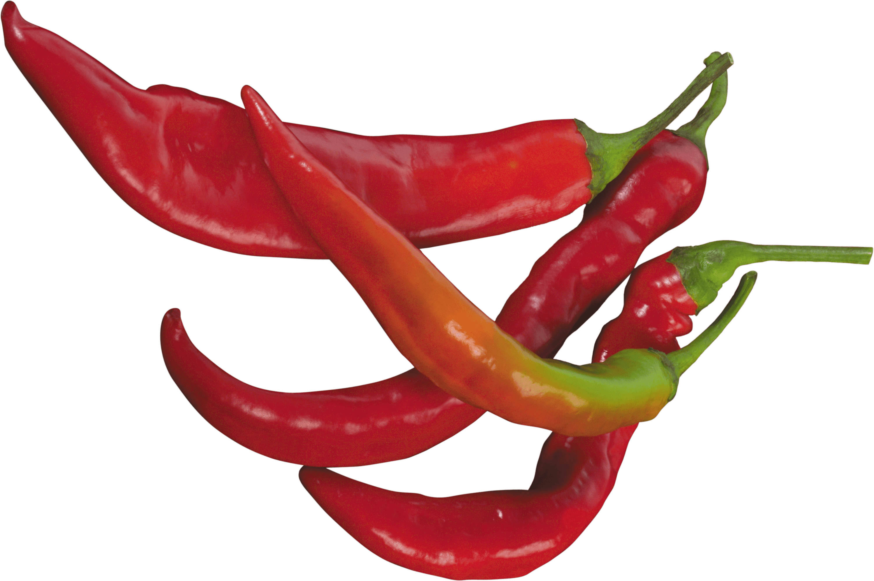 Red Chilli Pepper transparent PNG.