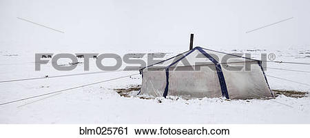 Stock Photography of Yurt, with metal chimney flue and livestock.