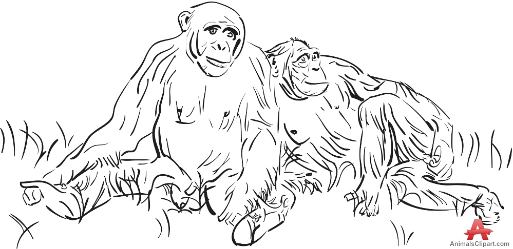 Drawing of Chimpanzee Family Sitting on Grass.