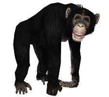 Chimp Png (110+ images in Collection) Page 3.