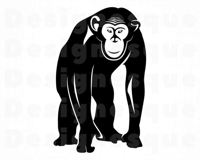 Chimp SVG, Monkey, Chimpanzee SVG, Chimpanzee Clipart, Chimpanzee Files for  Cricut, Chimpanzee Cut Files For Silhouette, Dxf, Png, Vector.
