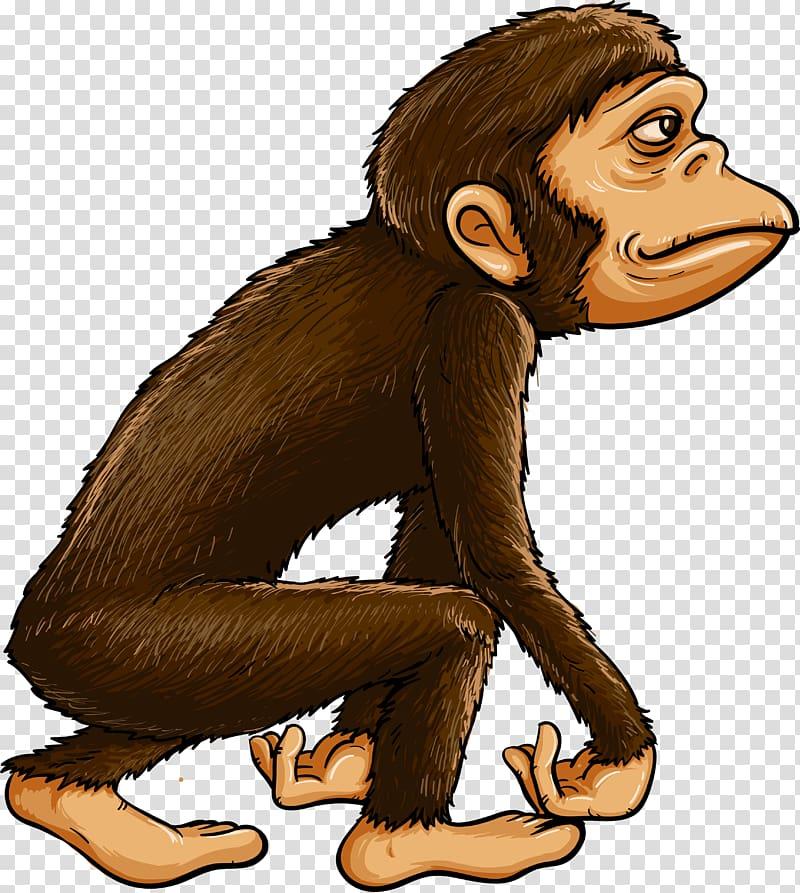 Chimpanzee Ape Primate Monkey, evolution transparent.