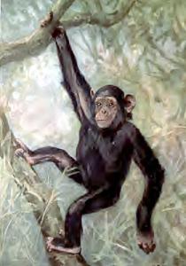 Chimpanzee Clip Art Download.