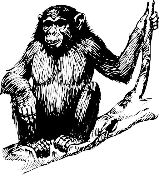 Free Chimpanzee Clipart, 1 page of Public Domain Clip Art.