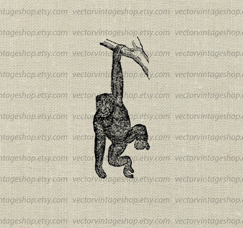 Monkey Vector Clipart Instant Download, Ape Animal Chimpanzee Clip Art  Chimp Vintage Chimpanzee Illustration Drawing jpg png eps WEB1743AD.