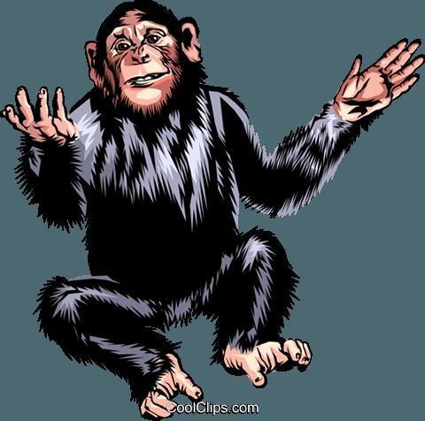 Chimpanzee Royalty Free Vector Clip Art illustration.