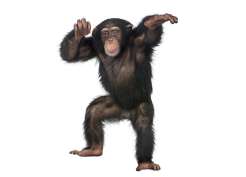 Chimpanzee Png (106+ images in Collection) Page 3.