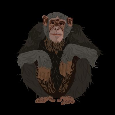 File:201502 Chimpanzee.png.