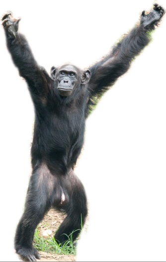 Meet Zakayo (54), our Chimp Champion!.