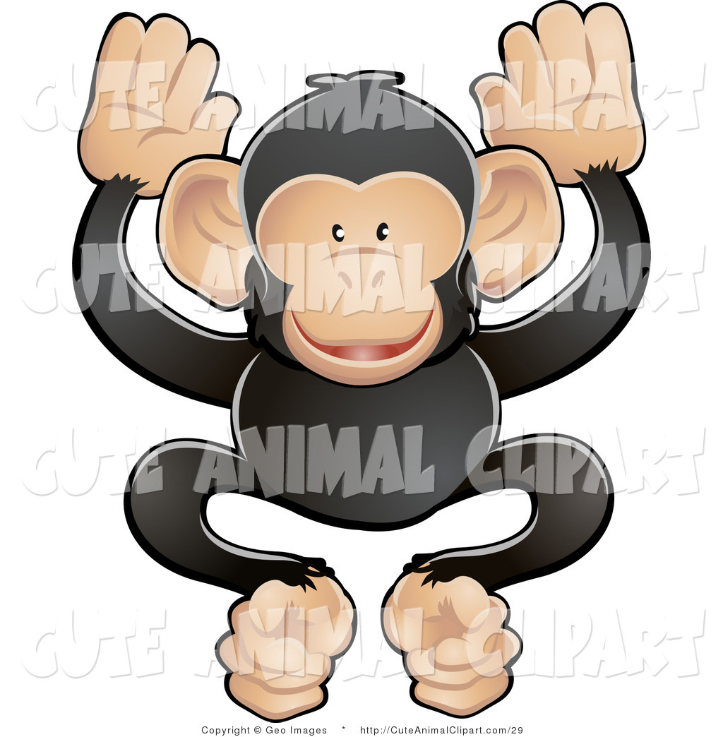 Royalty Free Stock Animal Designs of Chimpanzees.