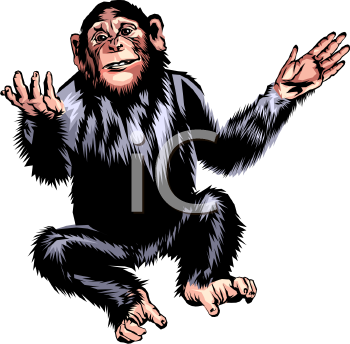 A Posing Chimpanzee.