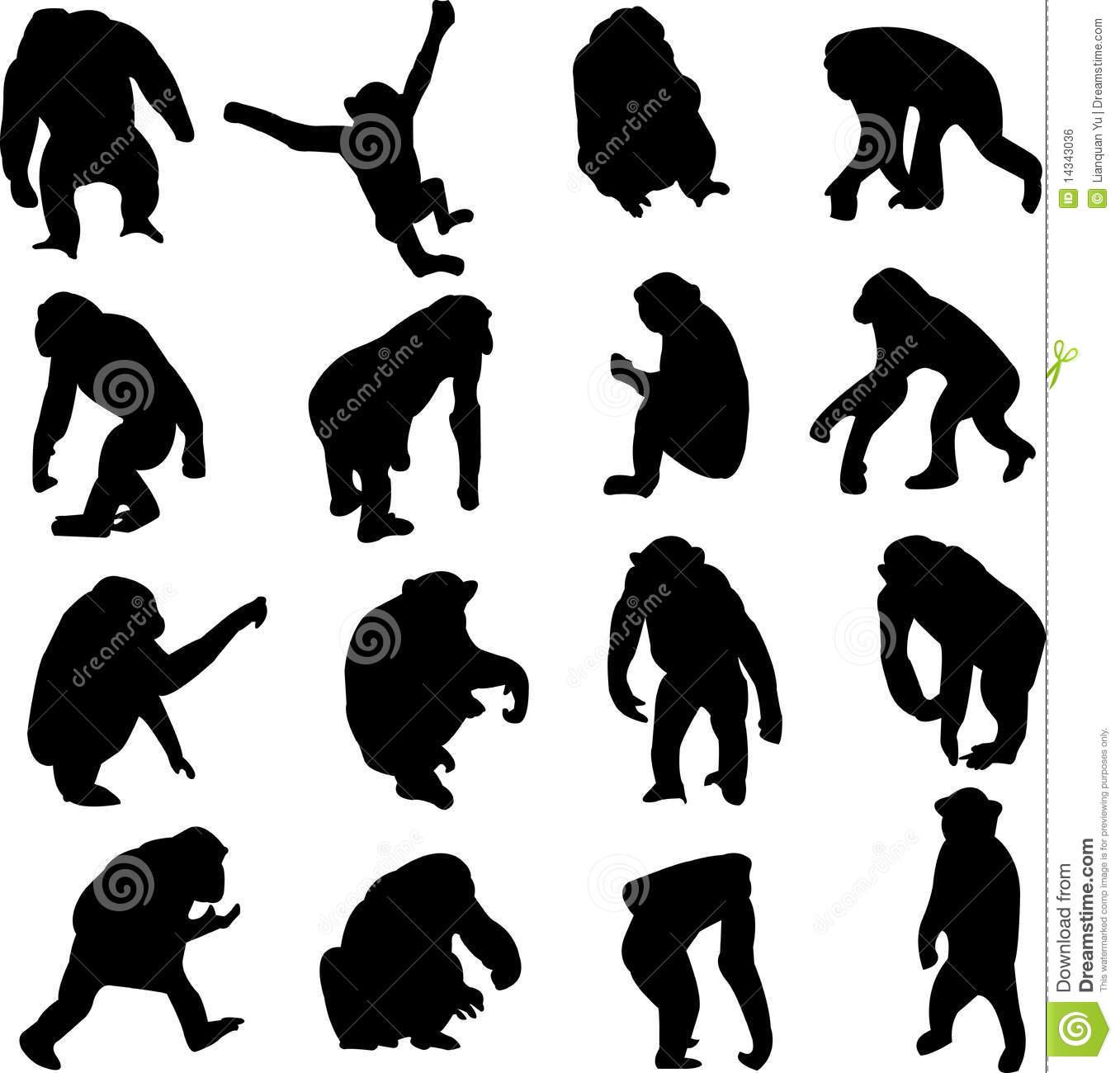 Chimpanzees Stock Illustrations.