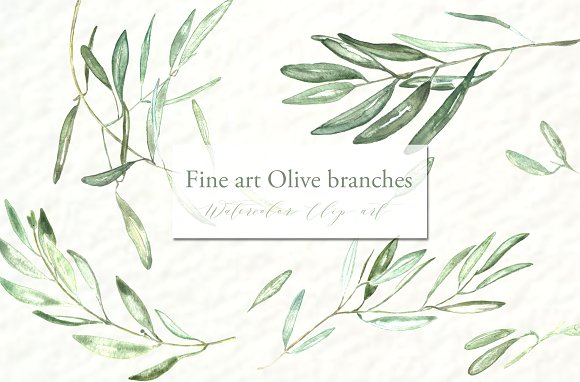 Olive branches. Watercolor clipart. ~ Illustrations on Creative Market.