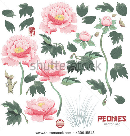 Chinese Peony Stock Photos, Royalty.