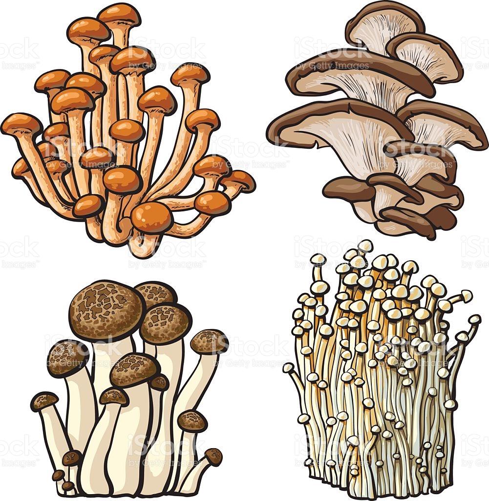 Set Of Shimeji Oyster Enokitake And King Trumpet Edible Mushrooms.