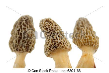 Morel mushrooms Stock Photo Images. 858 Morel mushrooms royalty.
