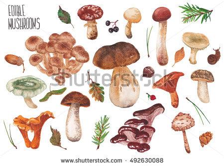 Wild Edible Mushrooms Stock Photos, Royalty.