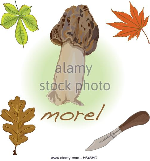 True Fungus Stock Photos & True Fungus Stock Images.