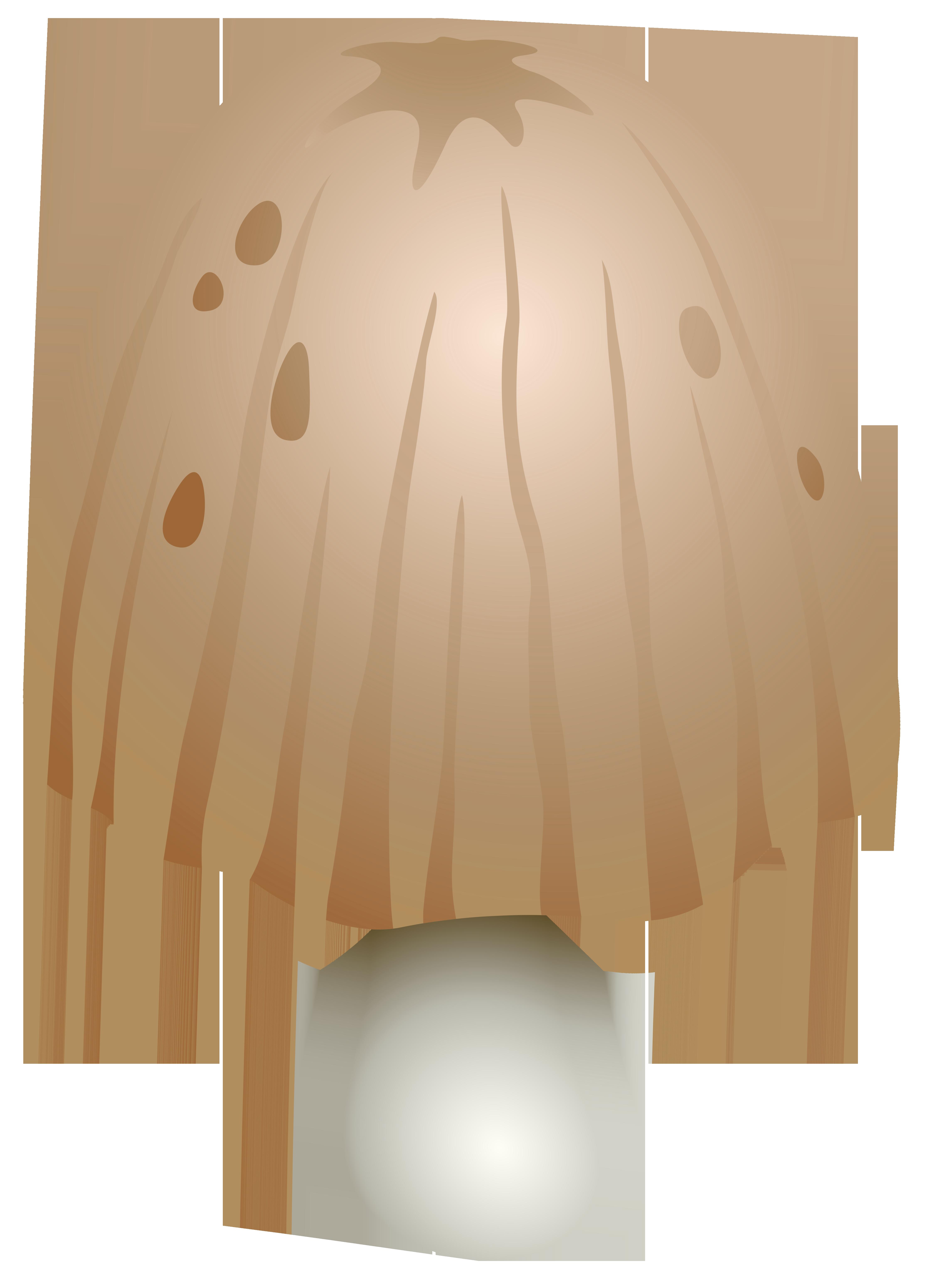 Coprinus Comatus Mushroom PNG Clipart.