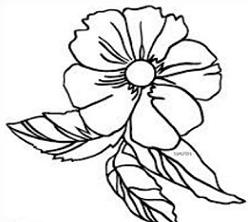 China rose clipart.