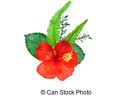Rose sharon Stock Photos and Images. 210 Rose sharon pictures and.