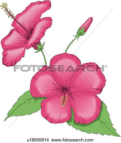 Clipart of China Rose u18505914.