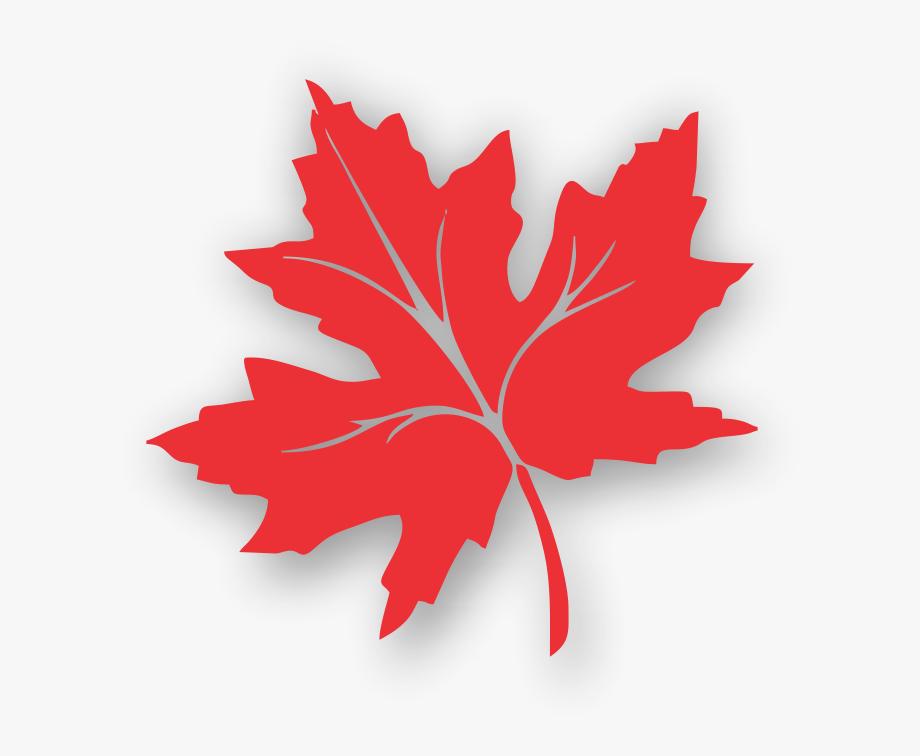 Maple Leaf Clipart Kashmir.