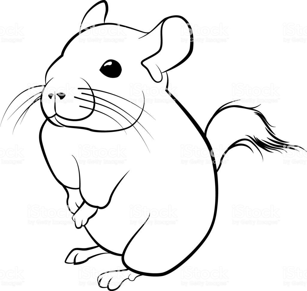 Cute Chinchilla Line Art Black Line Illustration Stock Illustration.