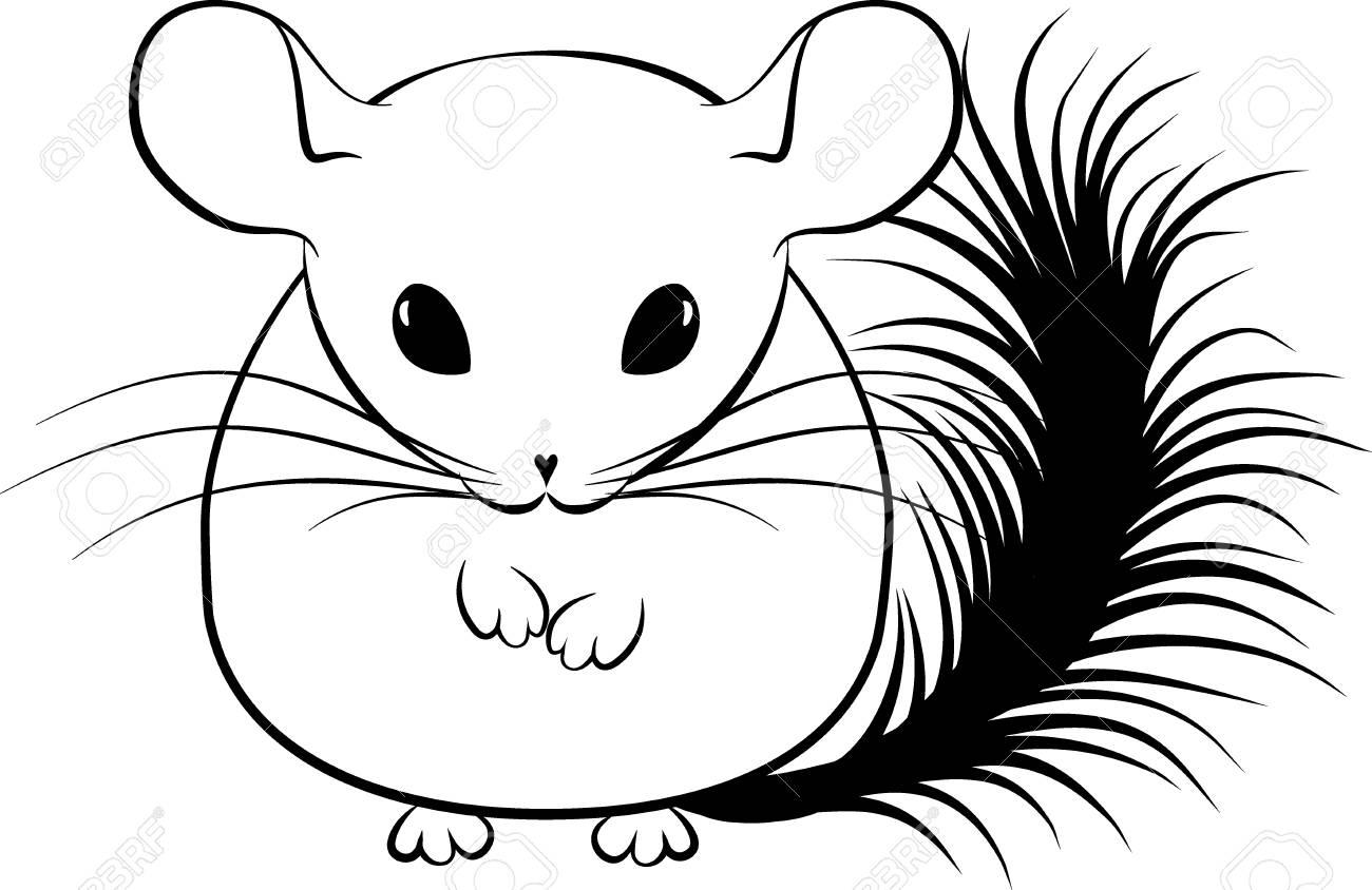 Monochrome illustration of cartoon stylized line art chinchilla...