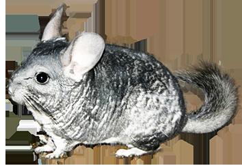 Animal Clip Art.