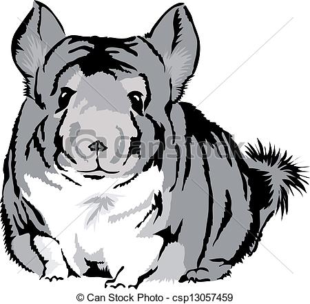 Chinchilla Illustrations and Clipart. 170 Chinchilla royalty free.