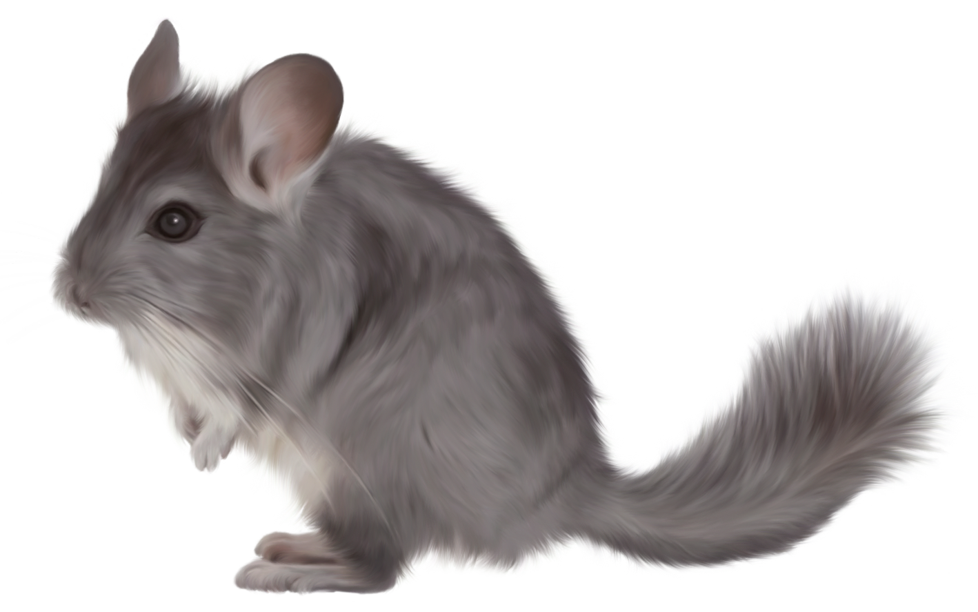 Painted Chinchilla PNG Picture Clipart.