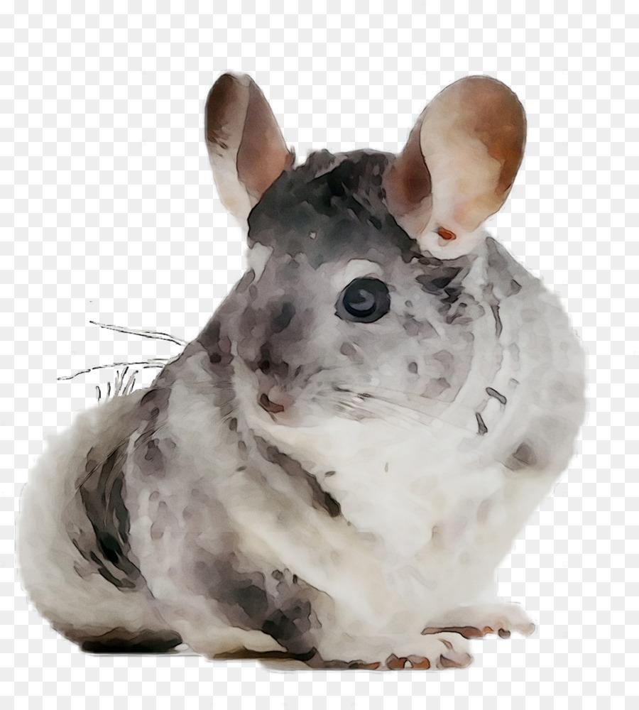 Hamster Background png download.