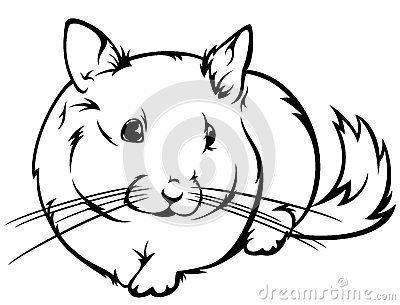 1000+ images about Chinchilla on Pinterest.
