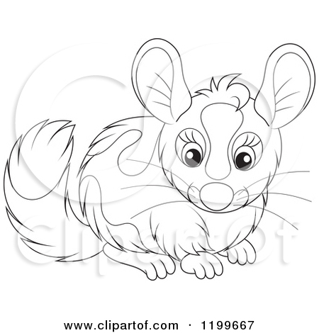 Clipart of a Cute Gray Chinchilla.