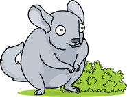 Chinchilla Clipart.