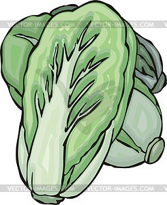 Chinese cabbage clipart.