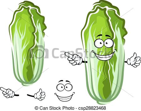 Chinese cabbage Vector Clipart Royalty Free. 261 Chinese cabbage.