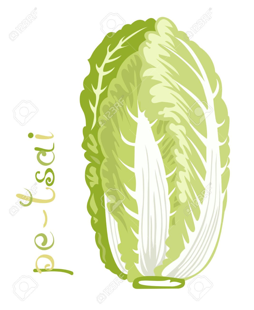 Chinese Cabbage. Illustration Of Fresh Vegetable. Cartoon Pe.