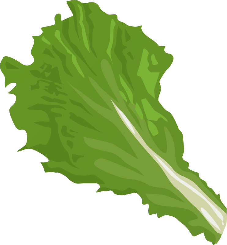 Free Chinese Cabbage Leaf Clip Art.