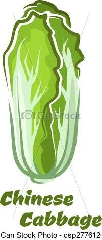 Clip Art Vector of Chinese cabbage vegetable with crinkly leaves.