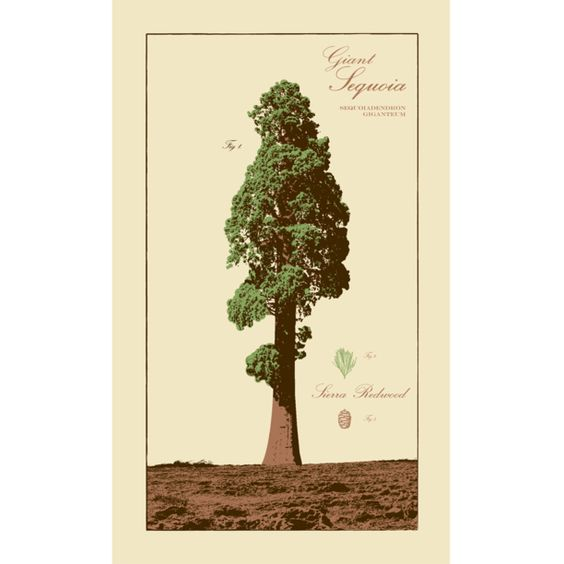 Giant Sequoia Poster.