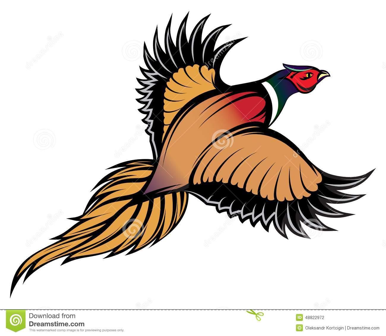 Golden Pheasant. Vector Illustration Stock Vector.
