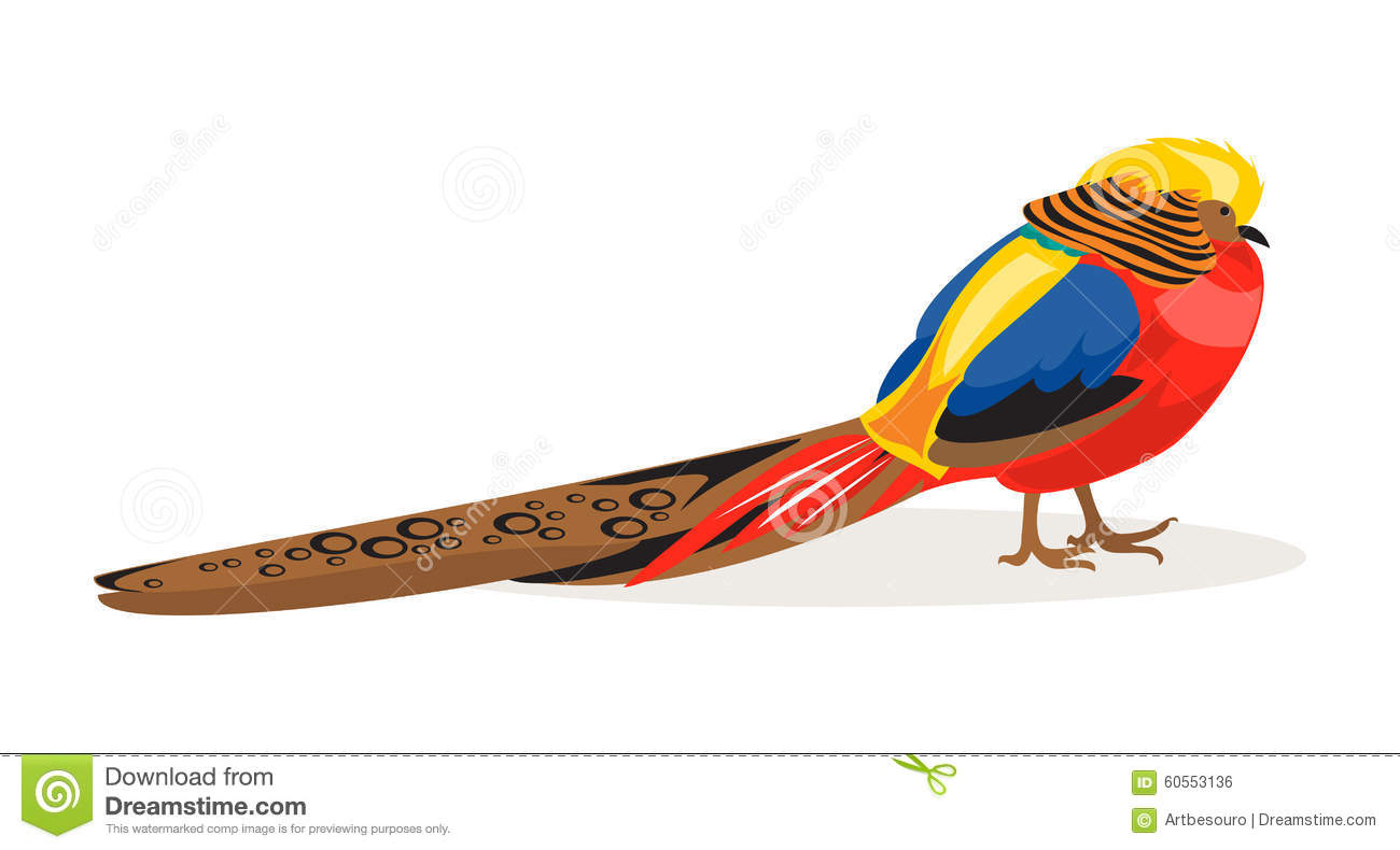 chinese golden pheasant clipart
