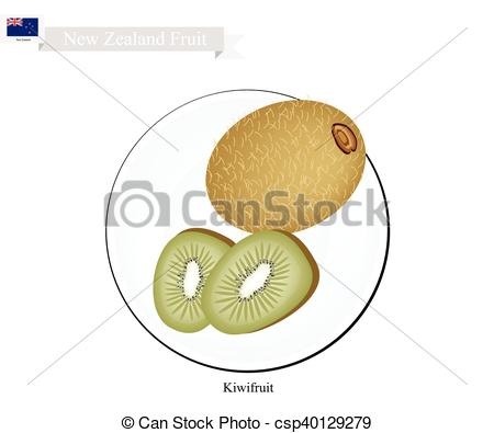 Vectors Illustration of Kiwifruit or Chinese Gooseberry, A Popular.