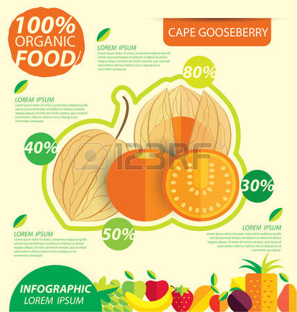 85 Cape Gooseberry Stock Illustrations, Cliparts And Royalty Free.