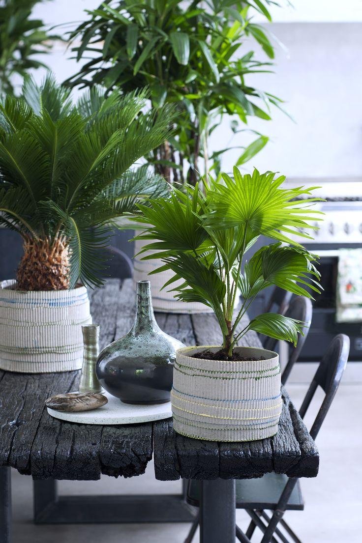 1000+ ideas about Palmen Pflanzen on Pinterest.