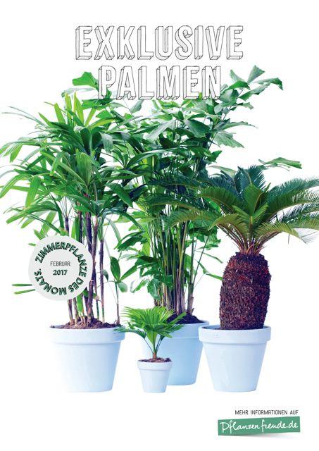 Over 1000 idéer om Palmen Pflanzen på Pinterest.