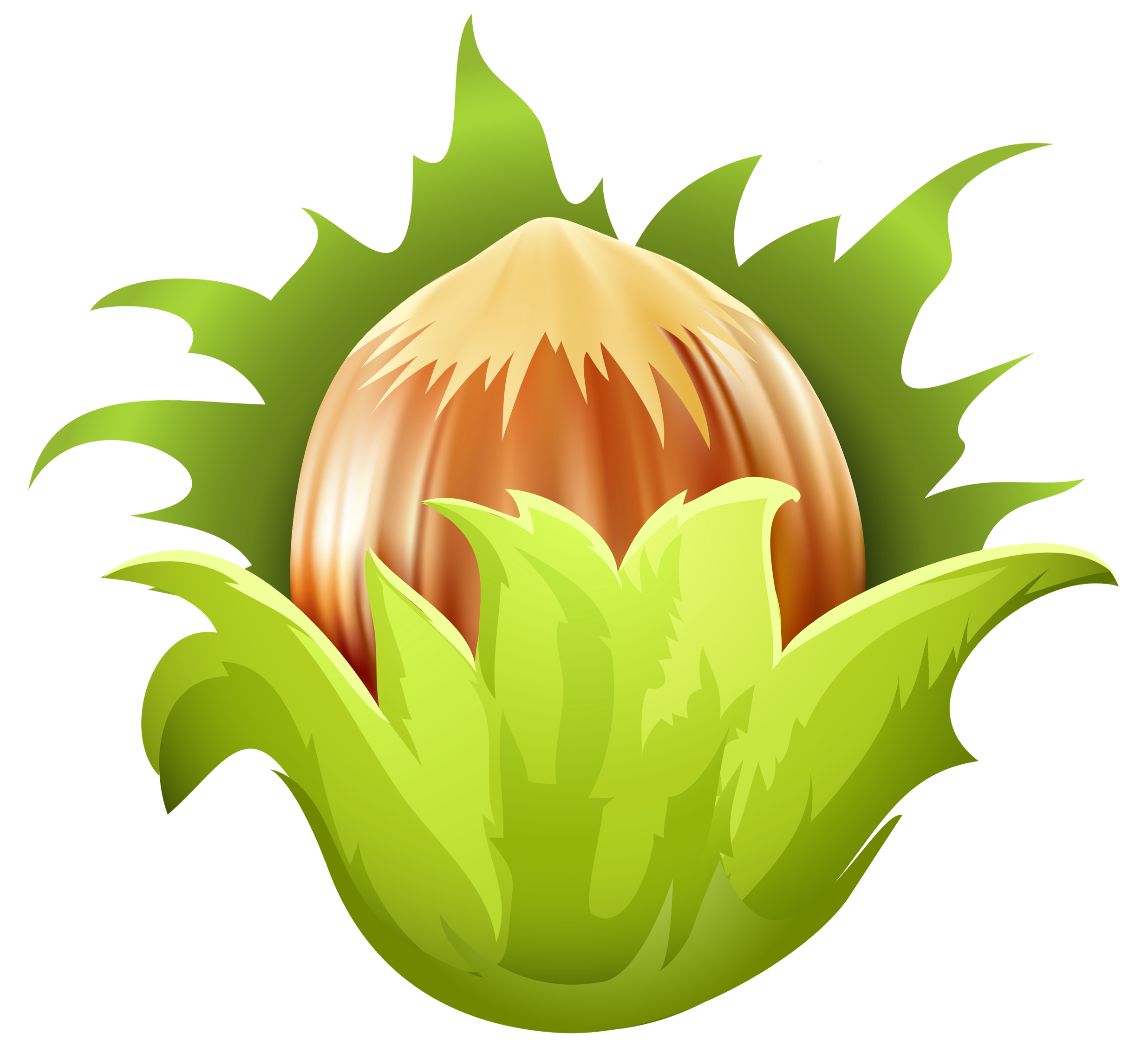 Hazelnut PNG Clip Art.